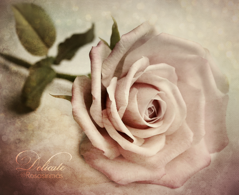 Delicate by ROSASINMAS