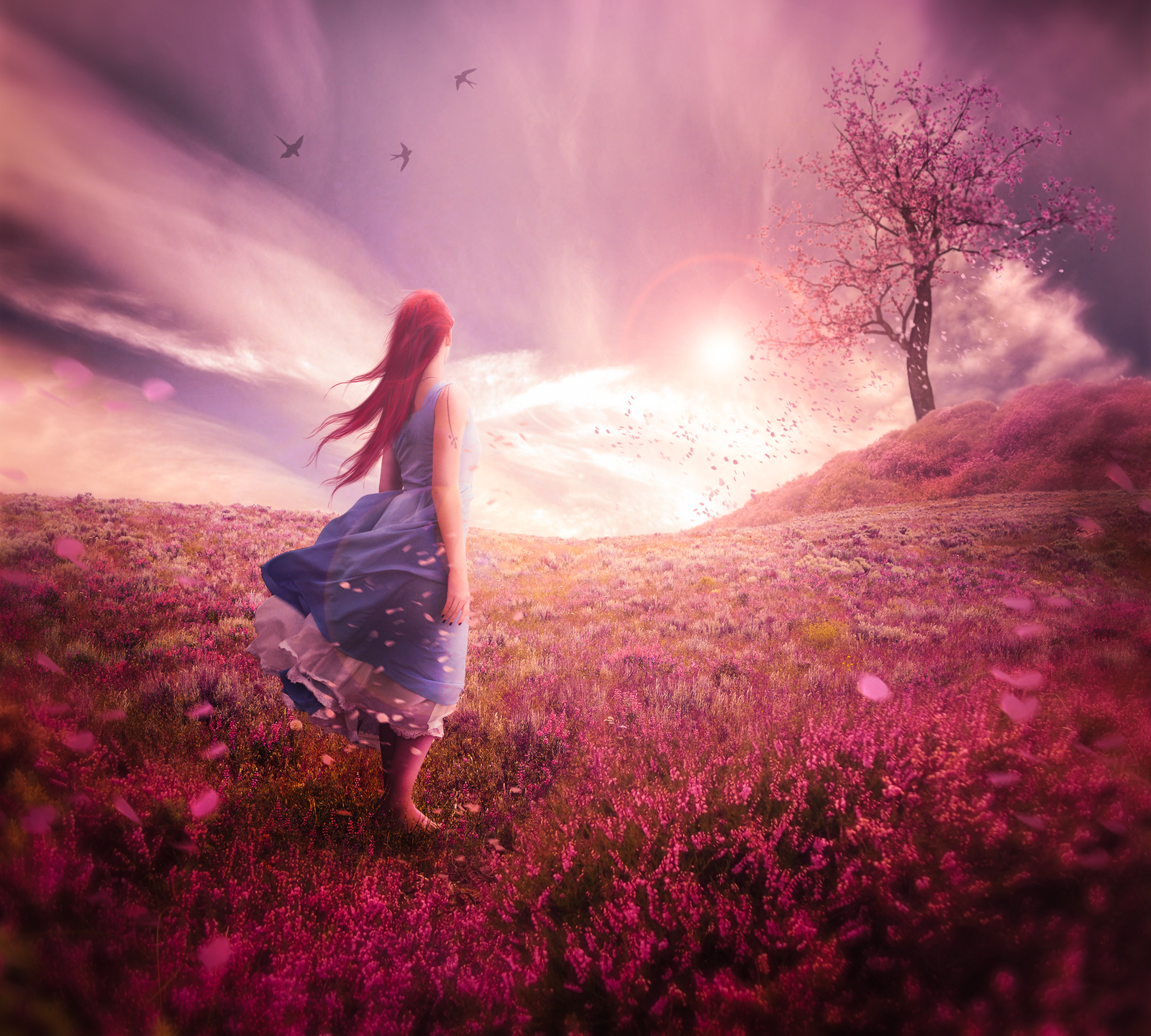 Lavender Sunset by imagase