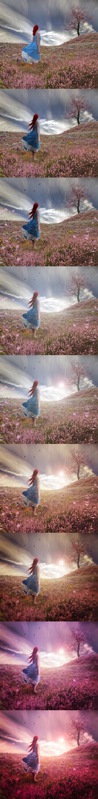 Lavender sunset (STEPS) by imagase