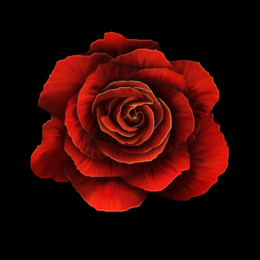 Red Rose by imagase