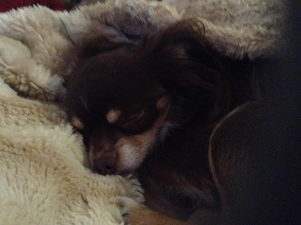sleep tight, my furry friend. by Charliegoober