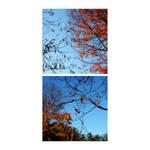 Fall Composition II