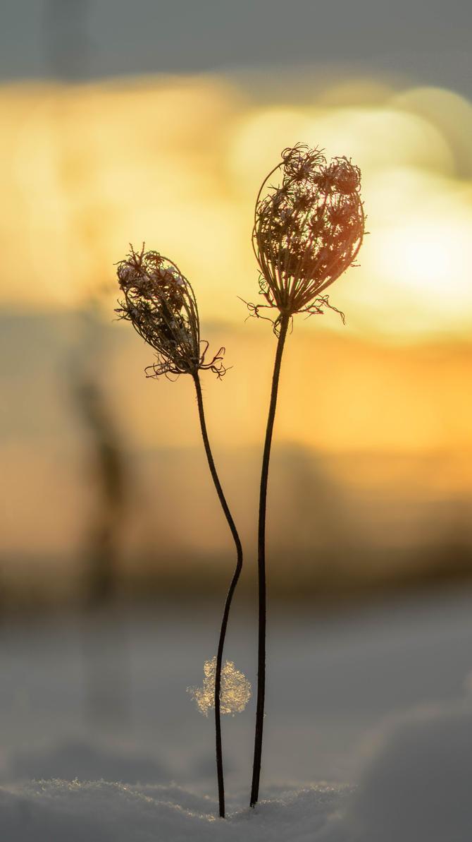 Sunrise by Puiu-Cristian