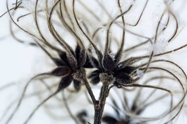 Seeds by Puiu-Cristian