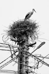 Stork by Puiu-Cristian