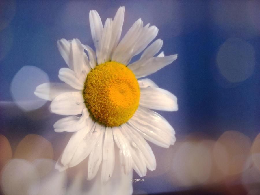 Daisy 2 by xAnnca
