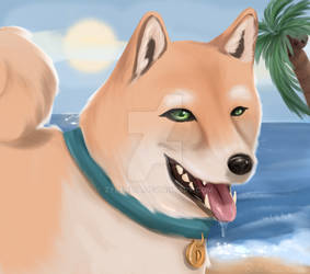 Doge - A gift