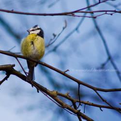 little fluffy birdie by Wasserlauf