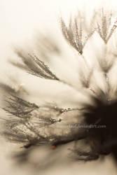 when dew meets dandelion