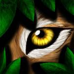 Vision du Lynx