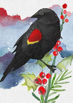 Winter Redwing