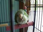 Polly wanna finger