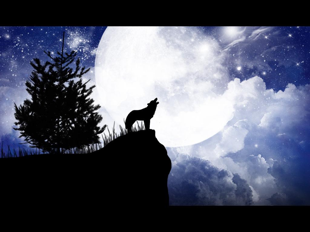 Da o nota pozei Wolf_by_m_a_t_h_e_s
