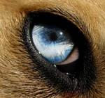 Blue eyes-2