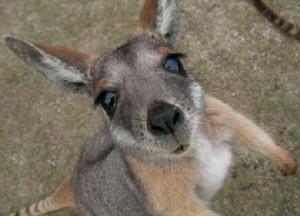 KangarooJess135's Profile Picture