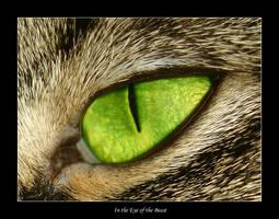 In the Eye of the Beast by DexterousDamsel