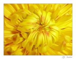 My Sunshine by DexterousDamsel