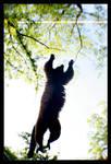 I can fly... by SawSomething