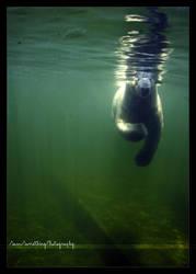 Gosh i forgot my snorkel by SawSomething