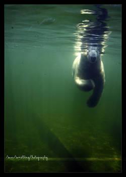 Gosh i forgot my snorkel
