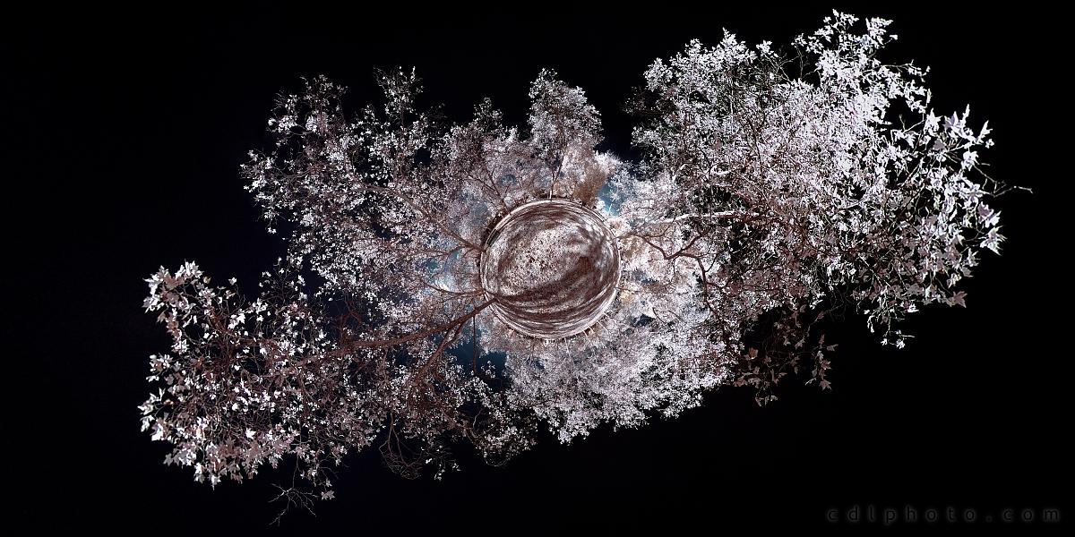 Snowflake by calanjackal