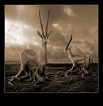 Earthbound Gazelles