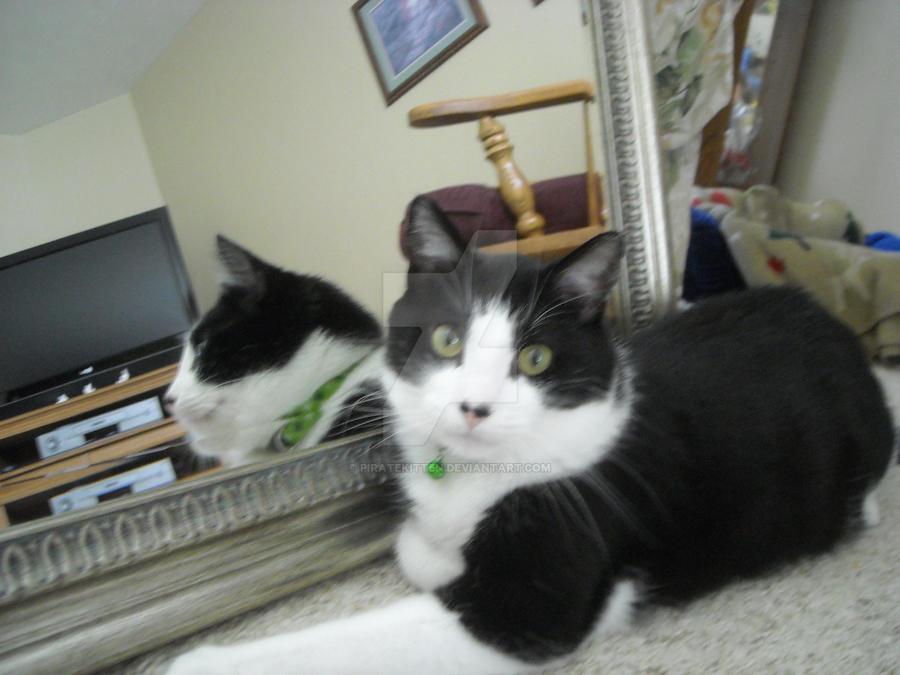 Mirror Kitty by piratekitten