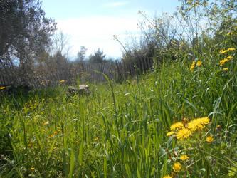 Green Hills Stage1
