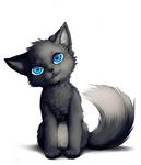 the catfox