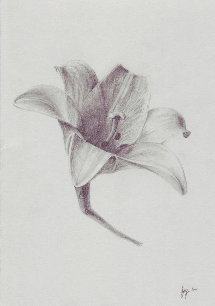 Lily - Graphite by 6re9Lily Flower Drawings In Pencil