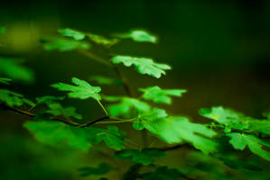Leaves of the forest. by D250Laboratories