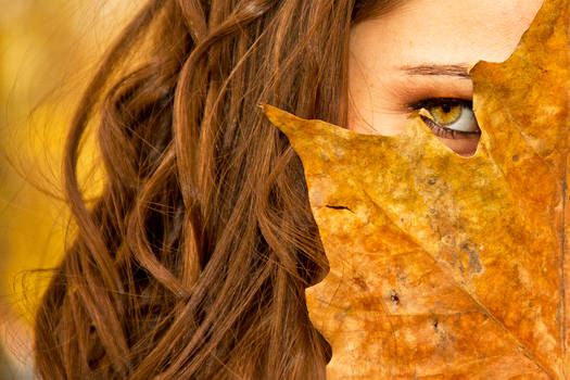 Autumn Leaves ...