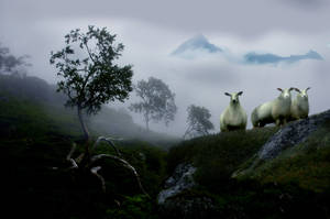 curious sheep in a foggy scape by steinliland
