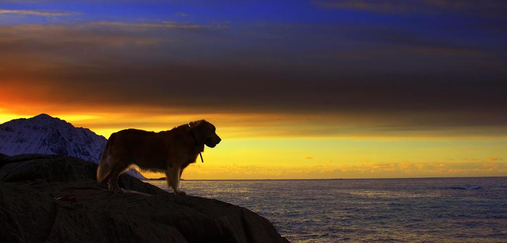 <b>Golden sunset</b> on the beach HD wallpaper #542889