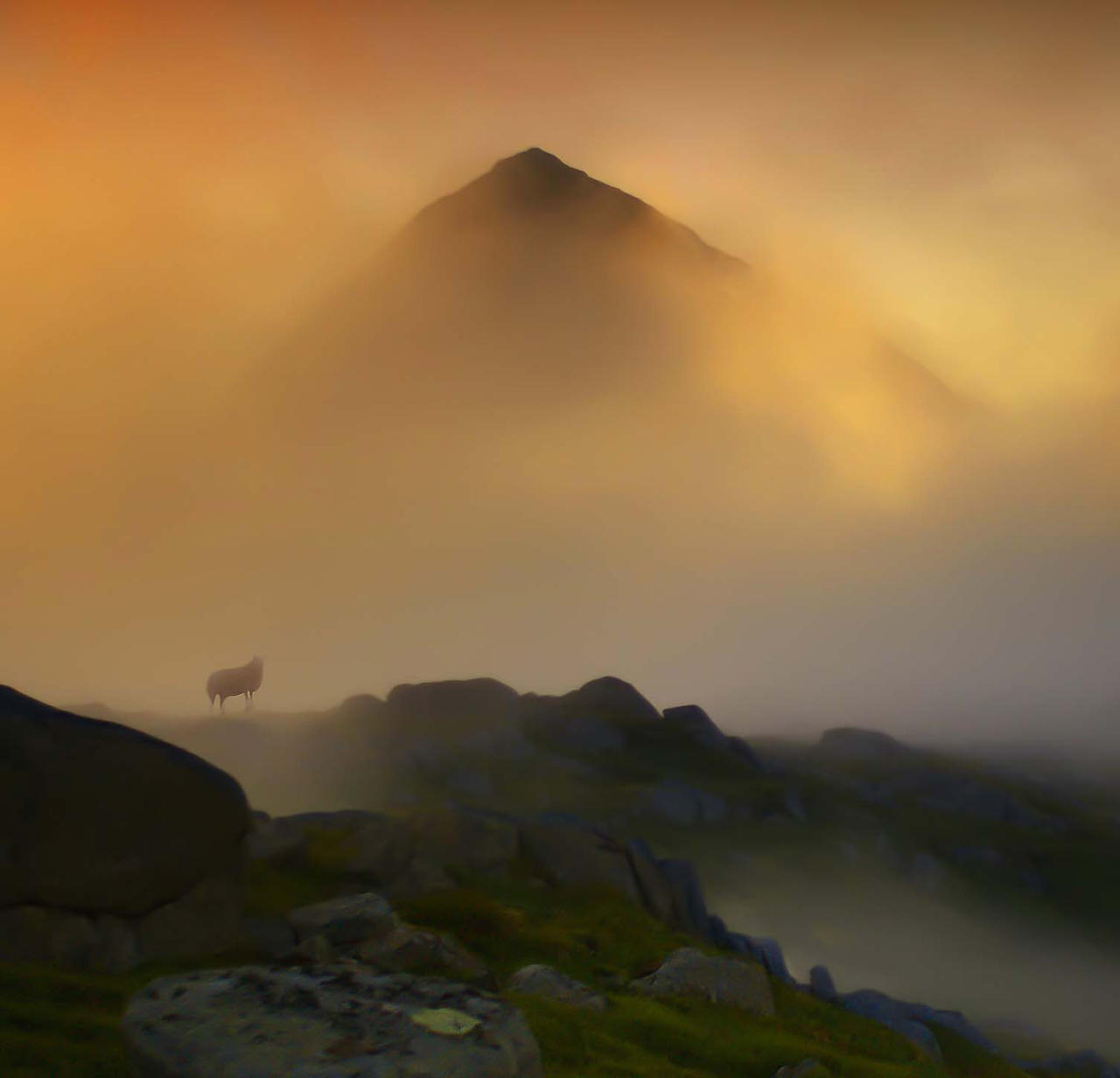 Golde mist and one lost sheep by steinliland