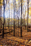 Fall Forest Stock 03