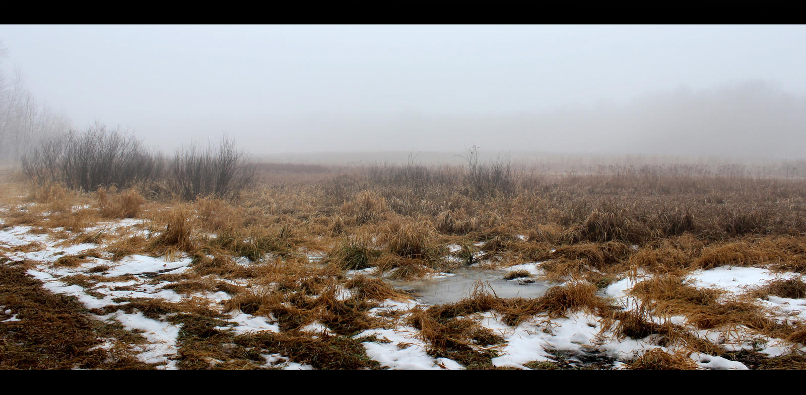 Foggy Swamp Stock