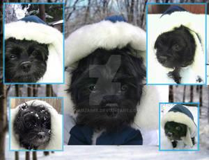 Nico Snow