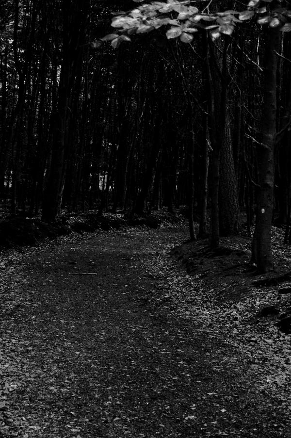 The dark path of the w... Dark Path In The Woods