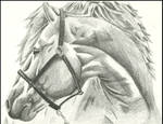 Caballo by raphaelss