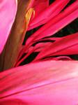 Pink Leaves 4