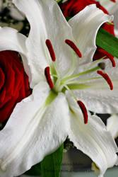 Birthday flowers by toshiro-sthlm
