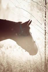 Orhan in the winter sun