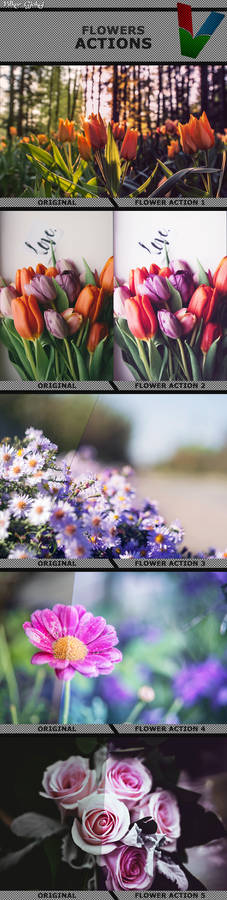 Flower Actions 1