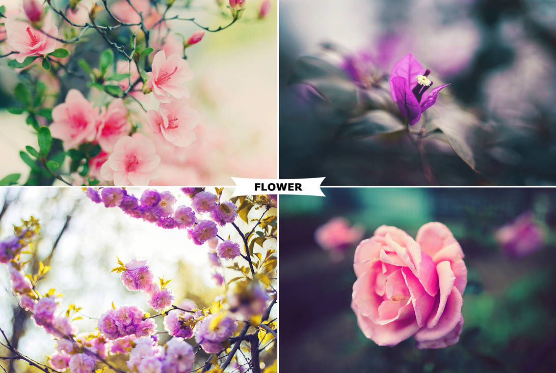 Flowers Photoshop Actions by ViktorGjokaj
