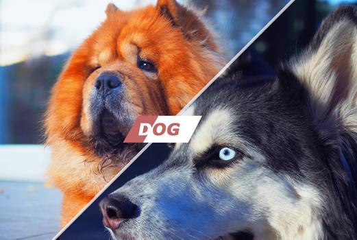 Dog Photoshop Actions