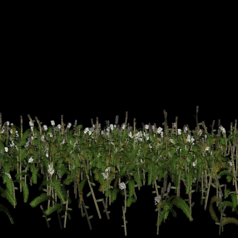 grassses 2