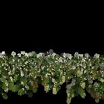 grasses 3