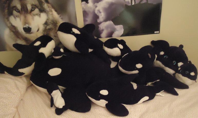 SilenceisBrilliant's Orca Stuffed Animals 2012 by SilenceisBrilliant