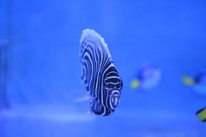 Trippy Fish by SilenceisBrilliant